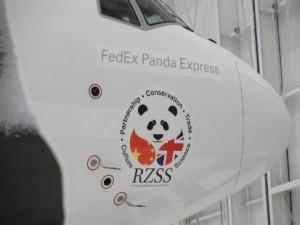 fedex_panda_ logo